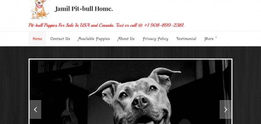 Jamilpitbullhome.com - Pit Bull Puppy Scam Review