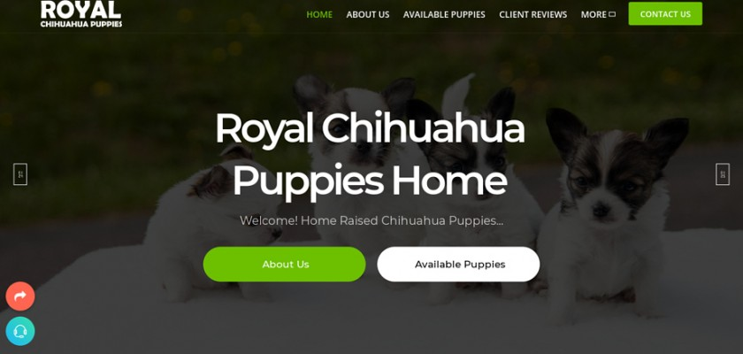 Royalchihuahuapuppy.com - Chihuahua Puppy Scam Review