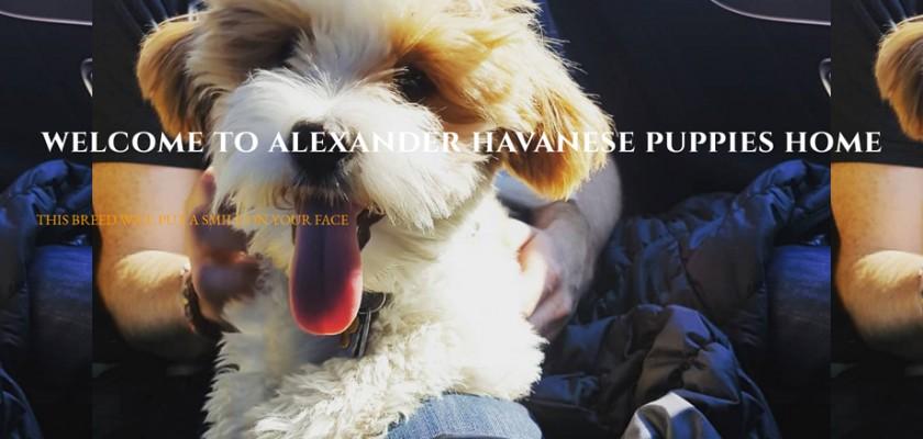 Alexanderhavanesehome.com - Havanese Puppy Scam Review