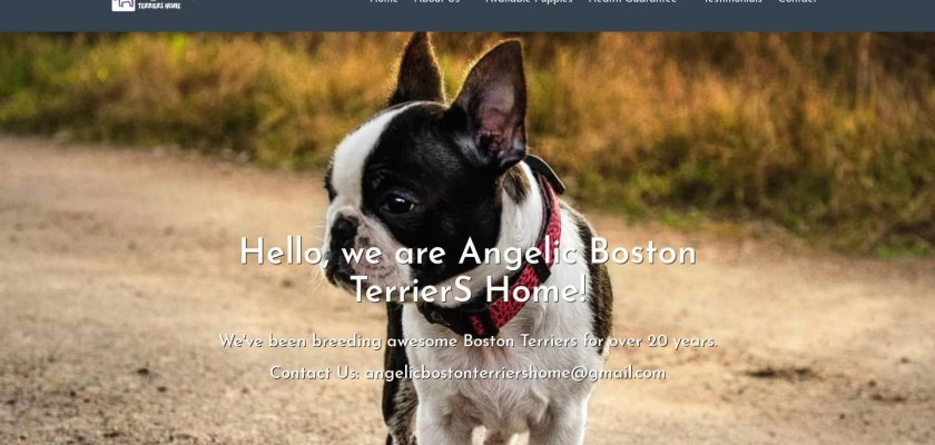 Angelicbostonterriershome.com - Boston Terrier Puppy Scam Review