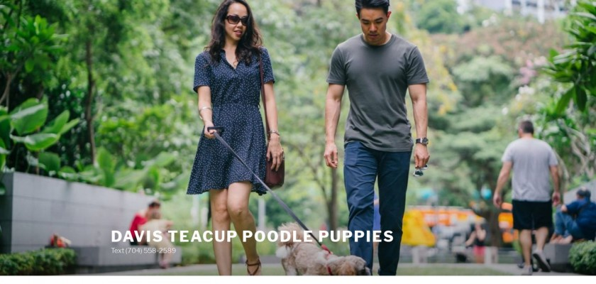 Teacuppoodlepuppies.com - Poodle Puppy Scam Review