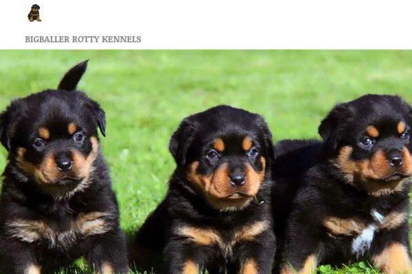 Ballerskennel.com - Rottweiler Puppy Scam Review