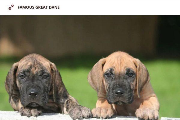 Homedanes.com - Great Dane Puppy Scam Review