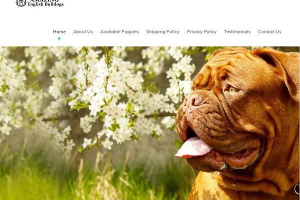 Amazingenglishbulldogs.com - English Bulldog Puppy Scam Review