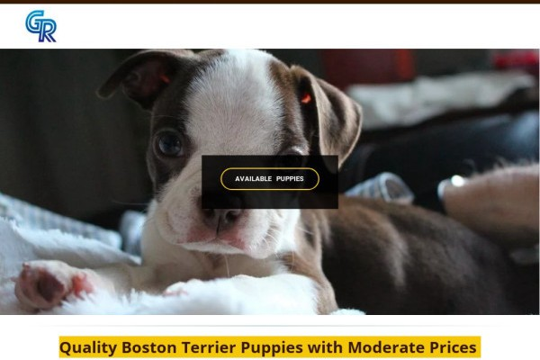 Grockbostonterrier.com - Boston Terrier Puppy Scam Review