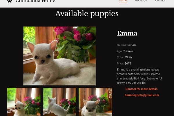 Harmonypetz.net - Chihuahua Puppy Scam Review