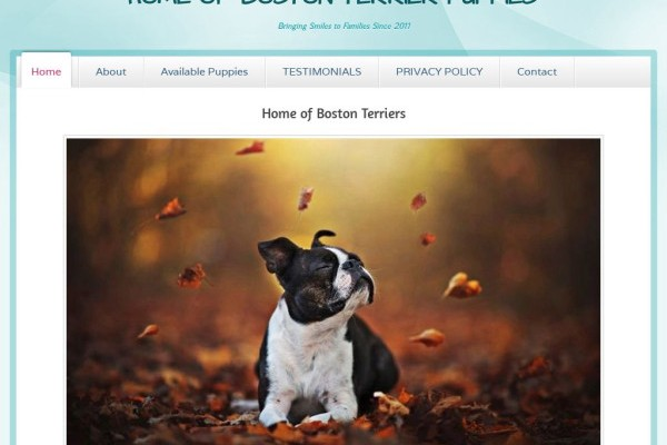 Homeofbostonterriers.com - Boston Terrier Puppy Scam Review