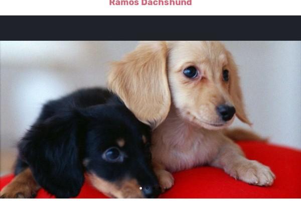 Ramosdachshund.com - Dachshund Puppy Scam Review
