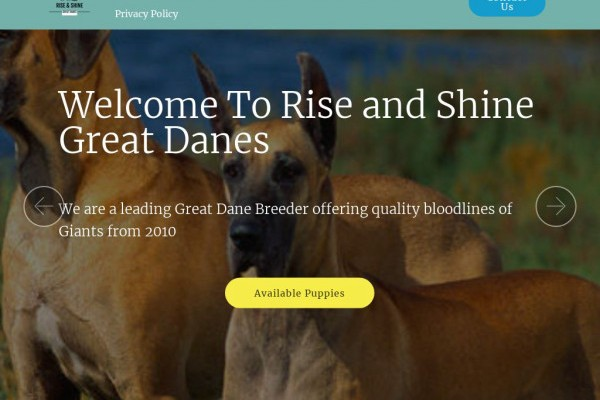 Riseandshinegreatdanepuppies.com - Great Dane Puppy Scam Review