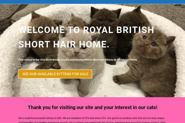 Royalbritishshorthair.com - British Shorthair Puppy Scam Review