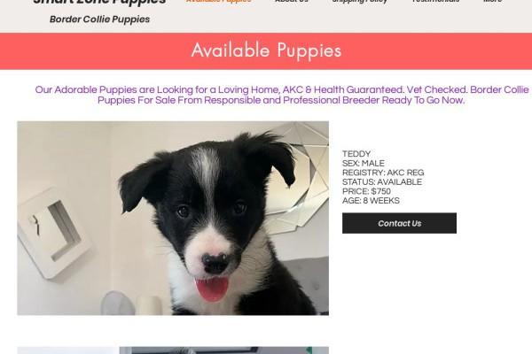 Smartzonepuppies.com - Bordercollie Puppy Scam Review