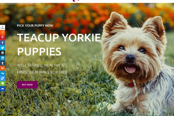 Imapethome.com - Yorkshire Terrier Puppy Scam Review