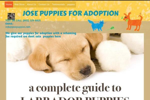 Josepuppies.com - Labrador Puppy Scam Review