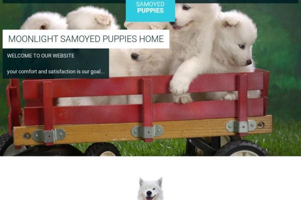 Moonlightsamoyeds.com - Samoyed Puppy Scam Review