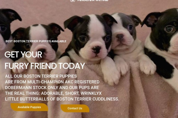 Cutebostonterrierhome.com - Boston Terrier Puppy Scam Review