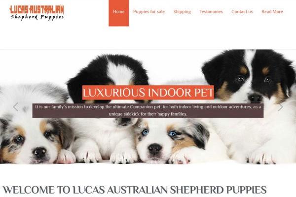 Lucasaustraliashepherdpuppies.com - Germanshepherd Puppy Scam Review