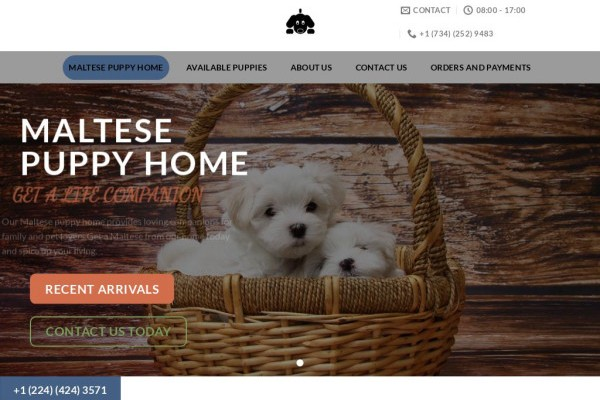 Maltesepuppyhome.com - Maltese Puppy Scam Review