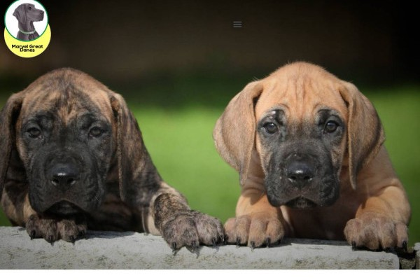 Marvelgreatdanes.com - Great Dane Puppy Scam Review