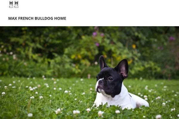 Maxfrenchbullhome.com - French Bulldog Puppy Scam Review
