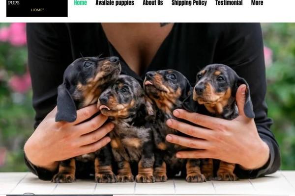 Prolificdachshund.com - Dachshund Puppy Scam Review