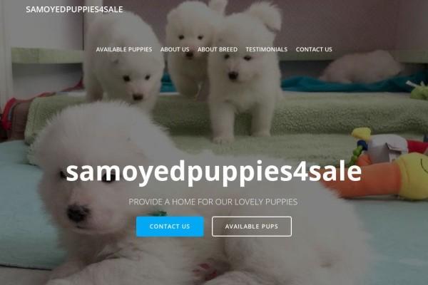Samoyedpuppies4sale.com - Samoyed Puppy Scam Review