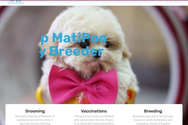 Teacupmatipoopuppies.com - Yorkshire Terrier Puppy Scam Review